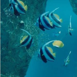 大水族馆旅游景点攻略图
