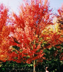 [旅顺口区游记图片] 秋天到大连看红叶