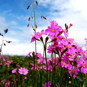 汶川游记图文-夏日成都自驾寻花之旅,年宝玉则,红原花海,若尔盖花湖一个都不能少(游记+实用自驾信息)