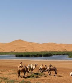 [中卫游记图片] 行走在沙漠与绿洲间(沙坡头——阿拉善左旗——银川)