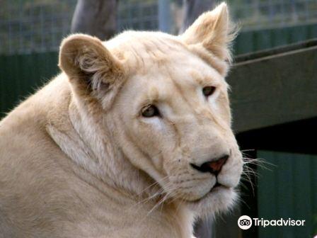 Zoodoo Zoo4
