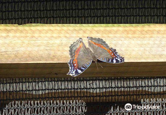 Butterfly Farm2
