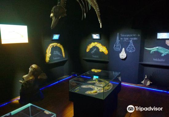 Museo de la ballena1