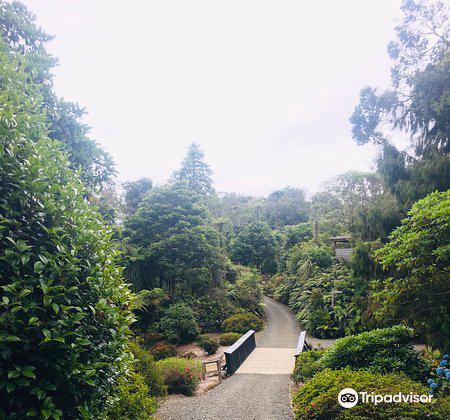 Pukeiti Rhododendron Park2