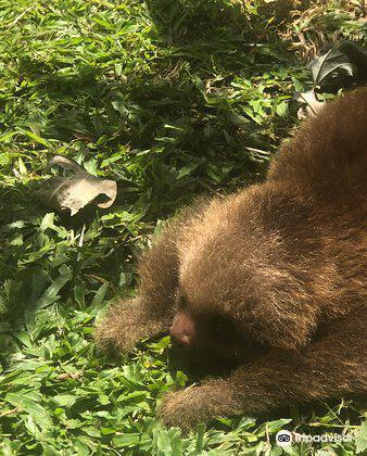 Costa Rica Animal Rescue Center1