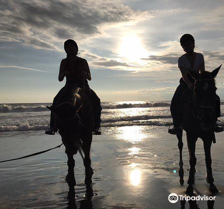 Kuda P Stables, Bali Horse Riding Experience3