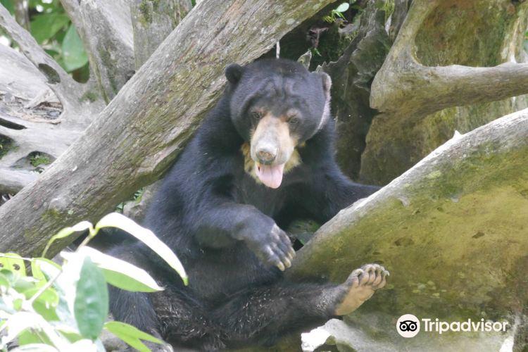 婆羅洲太陽熊保育中心2