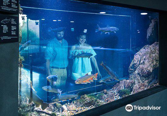 Aquatika Freshwater Aquarium Karlovac3
