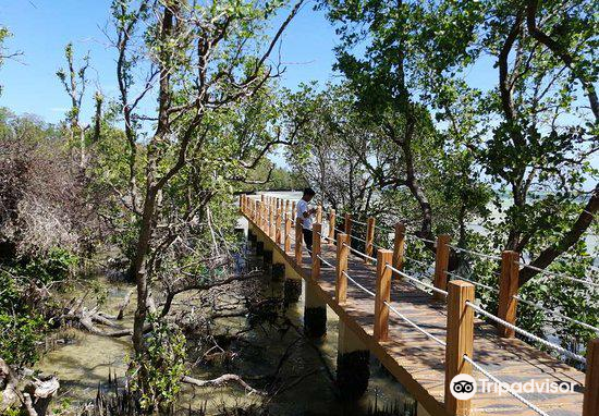Mangrove Nursery3
