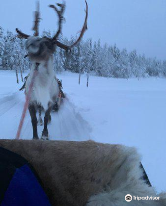 Ounaskievari Reindeer Farm3
