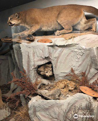 The Den - Jasper's Wildlife Museum1