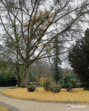 Jardin des Plantes2