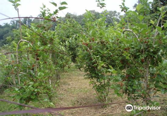 Isara Garden1