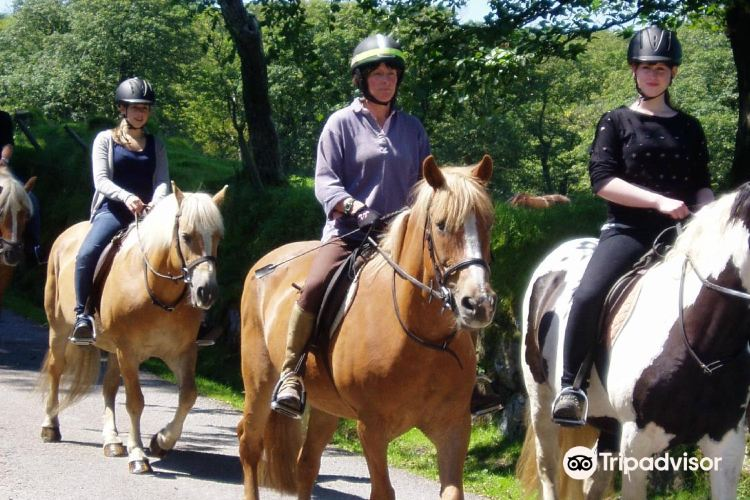 Tor Royal Riding Stables Dartmoor - Plymouth1
