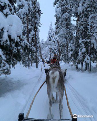 Ounaskievari Reindeer Farm