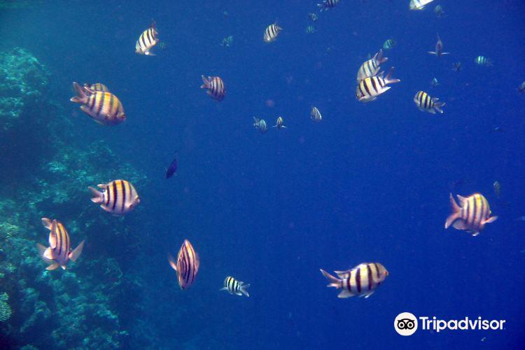 Jackson Reef4