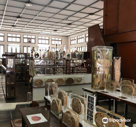 Siriraj Medical Museum1