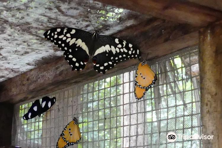 Zanzibar Butterfly Centre3