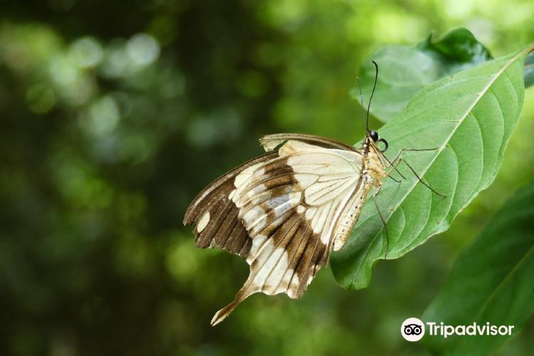 Zanzibar Butterfly Centre1