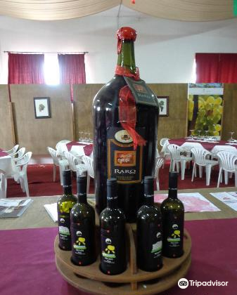 Cantina Albea winery and museum3