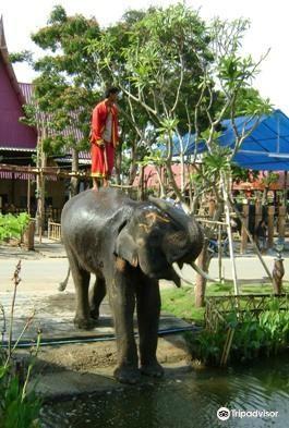 Ayothaya Elephant Village4