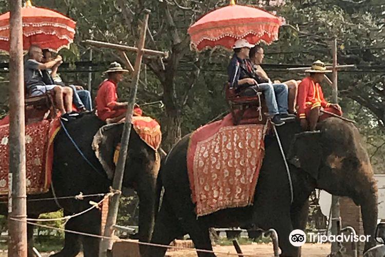 Ayothaya Elephant Village2