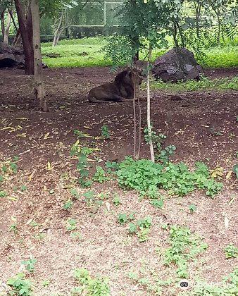 Pradyuman Park3