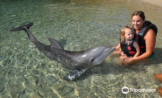 Dolphin Quest4