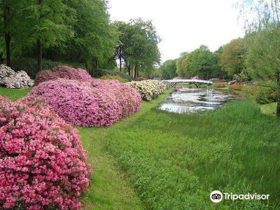 Rhododendronparken