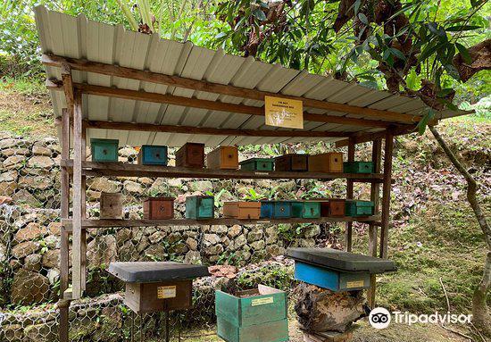 Tasbee Meliponiculture Farm4