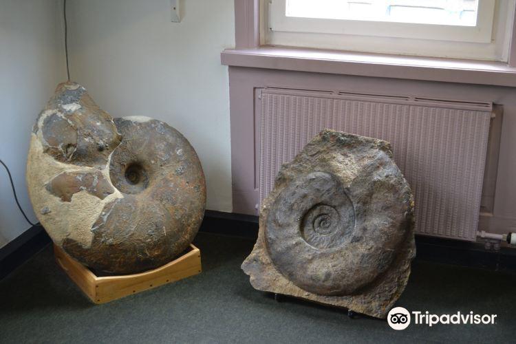 Urweltmuseum Aalen2