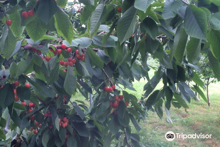 Fujimori Orchards