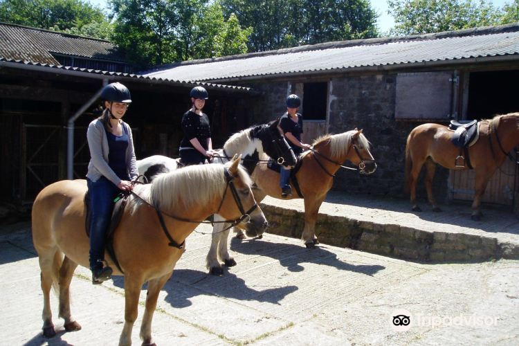 Tor Royal Riding Stables Dartmoor - Plymouth2