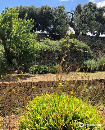 Giardino Botanico Lama degli Ulivi3