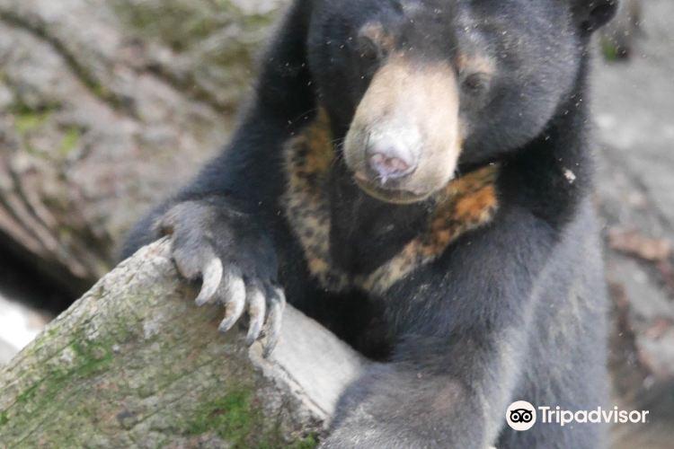 婆羅洲太陽熊保育中心3