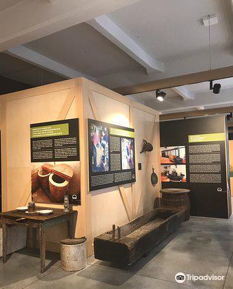 Museum Olei Histriae3