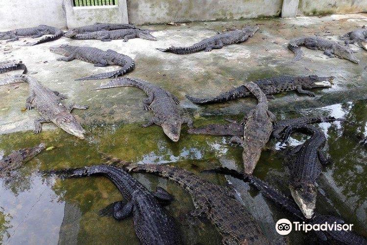 Miri Crocodile Farm3