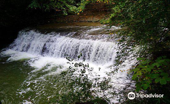 Robert Treman State Park3