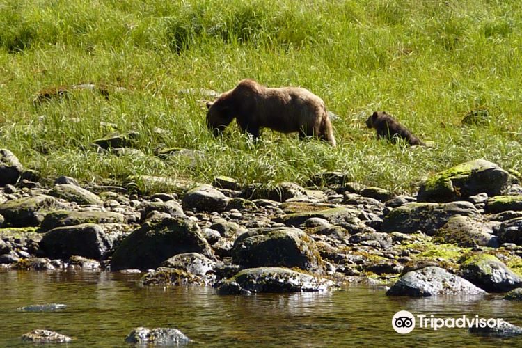 Grizzly Bear Refuge1