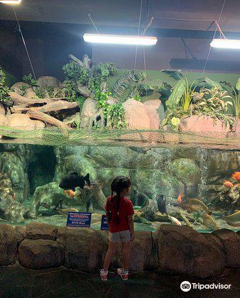索契海洋探索世界水族館2