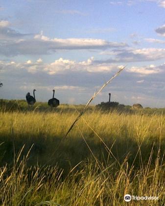 Mafikeng Game Reserve4