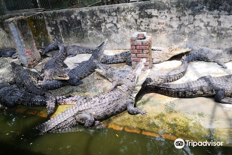 Miri Crocodile Farm1