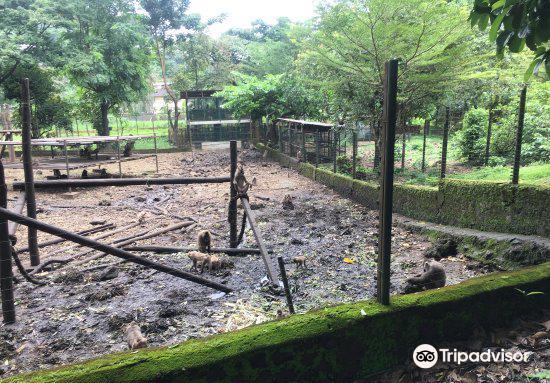 Limbe Wildlife Centre2