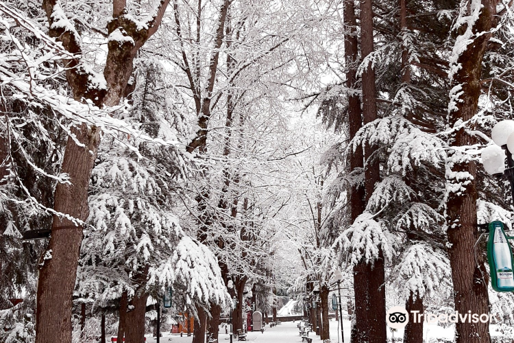 Borjomi Central (Historical) Park1