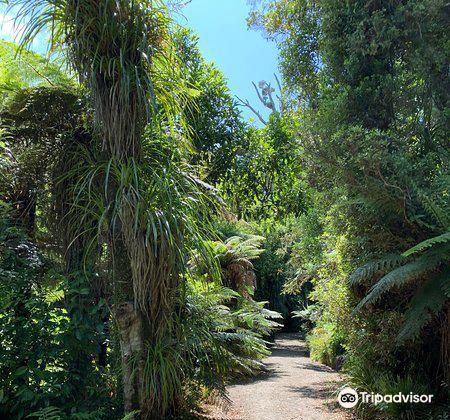 Pukeiti Rhododendron Park4