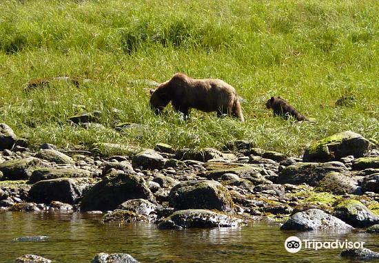 Khutzeymateen Grizzly Bear Sanctuary2