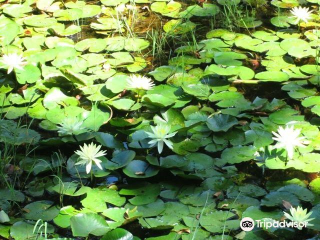 Springs of the Ipiranga State Park3