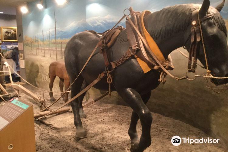 Horse Museum3