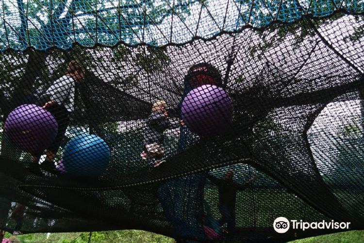 Treetop Nets3