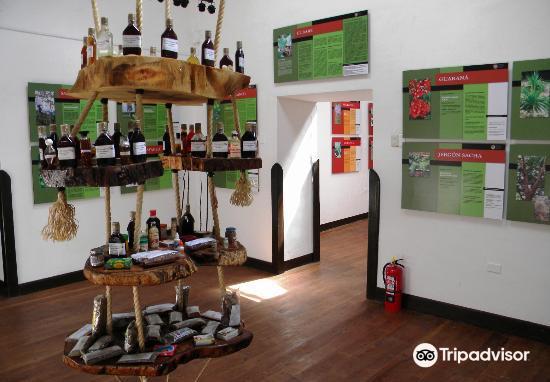 Museo de Plantas Sagradas, Magicas y Medicinales3